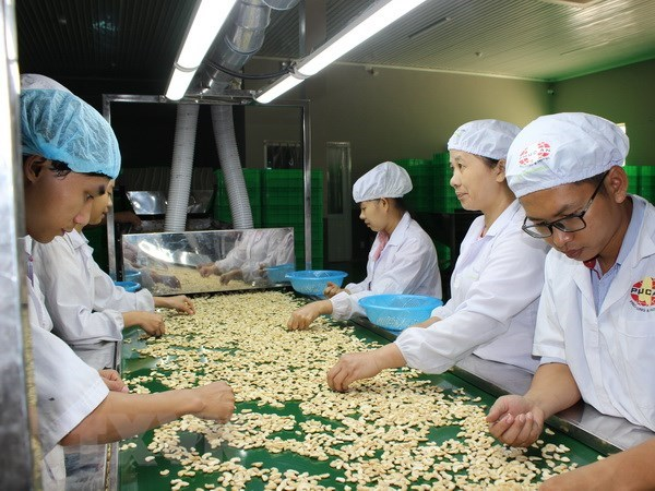 Many cashew nut factories in VN halt operations due to lack of materials