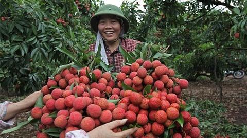 Vietnam struggles to export fruit to demanding markets